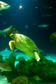 A Turtle in the Shark Tank
